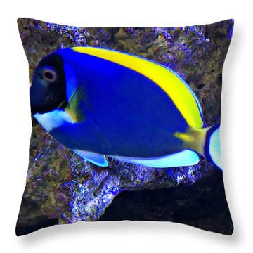 Blue Tang Fish  Throw Pillow