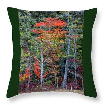 Pennsylvania Laurel Highlands Autumn Throw Pillow by John Stephens