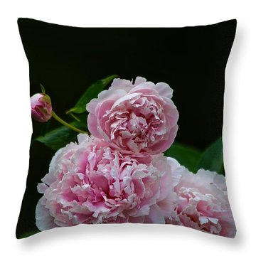 Peonies  Throw Pillow by Gillis Cone