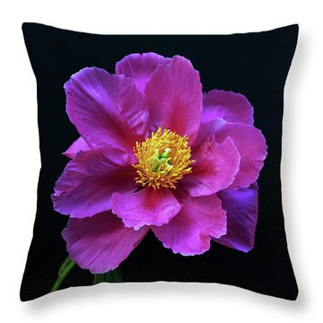 Peony - Beautiful Flowers And Decorative Foliage On The Right Is One Of The First Places Among The G Throw Pillow