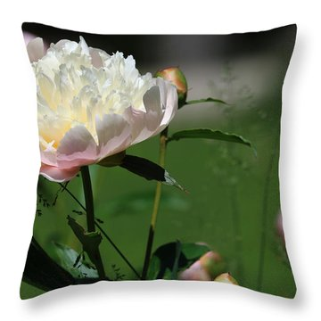 Throw Pillow featuring the photograph Peony Beauty by Rick Morgan