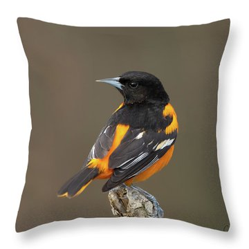 Perched Baltimore Oriole Throw Pillow