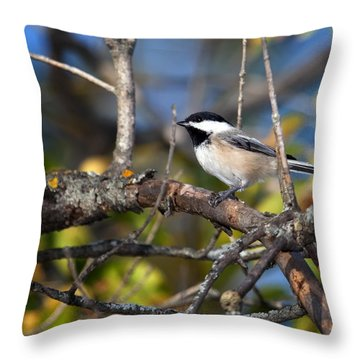 Perched Black-capped Chickadee Throw Pillow