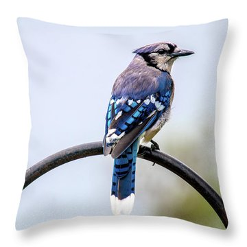 Throw Pillow featuring the photograph Perched Blue Jay by Onyonet  Photo Studios