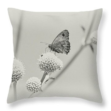 Perched Butterfly No. 255-2 Throw Pillow