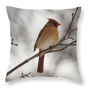 Perched Female Red Cardinal Throw Pillow by Debbie Oppermann