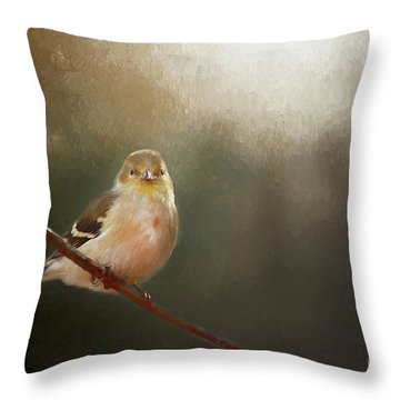 Throw Pillow featuring the photograph Perched Goldfinch by Darren Fisher