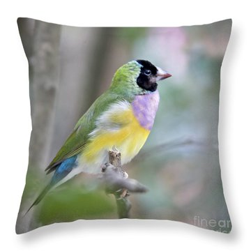 Perched Gouldian Finch Throw Pillow by Glennis Siverson