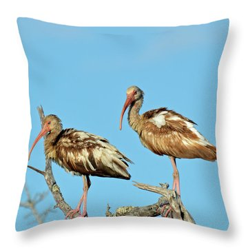 Perched White Ibises Throw Pillow by Bruce Gourley