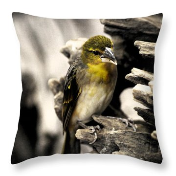 Perched Throw Pillow by Martin Newman
