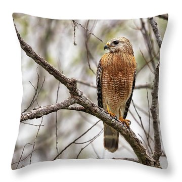 Perched Red Shouldered Hawk Throw Pillow