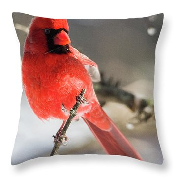 Perching Mister Cardinal Throw Pillow