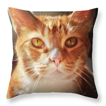 Percy In The Sun Throw Pillow