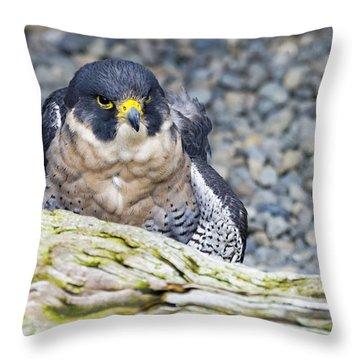 Peregrine Falcon 1 Throw Pillow