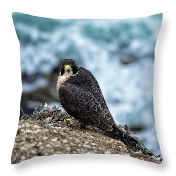 Peregrine Falcon - Here's Looking At You Throw Pillow