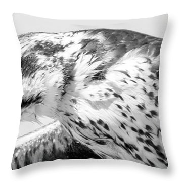 Peregrine Falcon In Black And White Throw Pillow