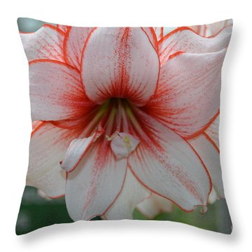 Perfect Amarylis Throw Pillow