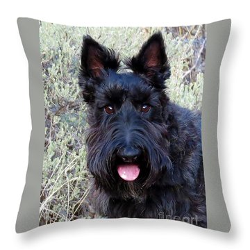 Throw Pillow featuring the photograph Scottish Terrier Portrait by Michele Penner