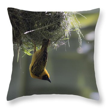 Perfect Weaver Throw Pillow