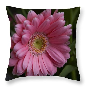 Throw Pillow featuring the photograph Perfection by Rhonda McDougall
