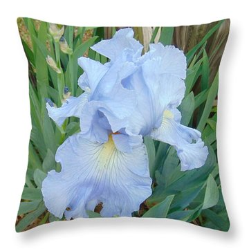 Periwinkle Iris  Throw Pillow by Charlotte Gray