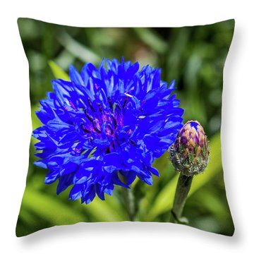 Perky Cornflower Throw Pillow