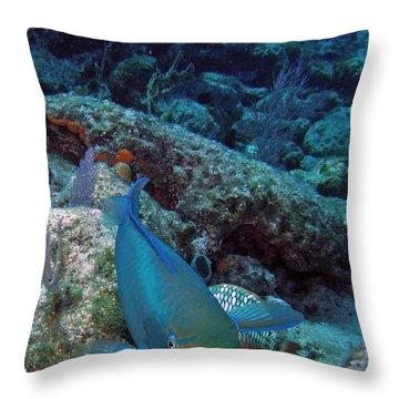 Perky Parrotfish Throw Pillow by Kimberly Mohlenhoff