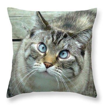 Pet Portrait - Lily The Cat Four Throw Pillow
