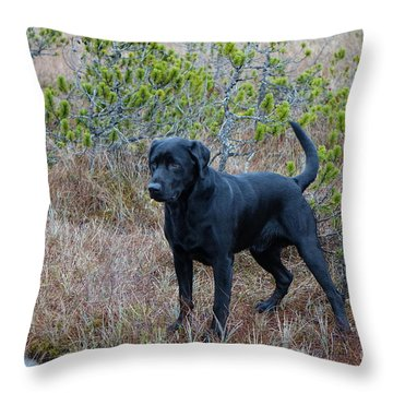 Pet Portrait - Radar Throw Pillow