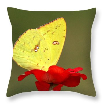Throw Pillow featuring the photograph Petals And Wings by Sheila Brown