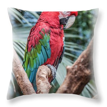 Peter Parrot Throw Pillow
