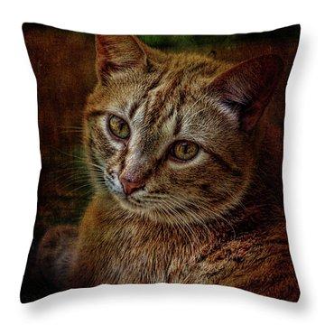 Pets Fat Cat Portrait 2 Throw Pillow