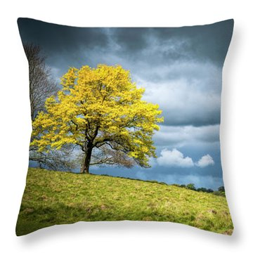 Throw Pillow featuring the photograph Petworth Dark And Light by Michael Hope