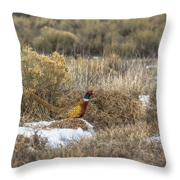 Throw Pillow featuring the photograph Pheasant Glory by Yeates Photography