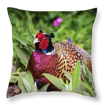 Pheasant Throw Pillow by Martin Newman