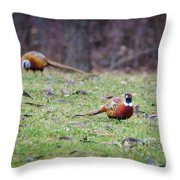 Pheasant Pair Throw Pillow