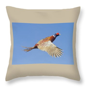 Pheasant Wings Throw Pillow