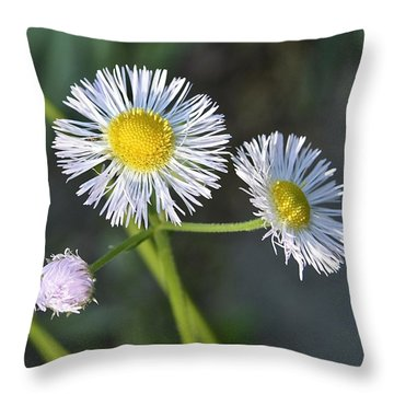 Philadelphia Fleabane Throw Pillow