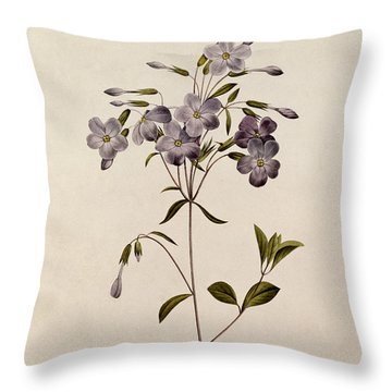 Phlox Reptans Throw Pillow by Pierre Joseph Redoute