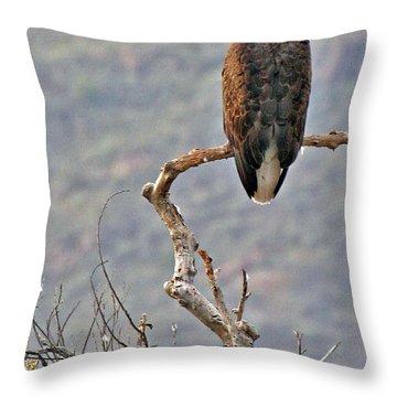 Phoenix Eagle Throw Pillow
