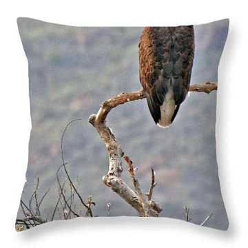 Phoenix Eagle Throw Pillow