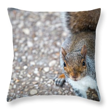 Photo Of Squirel Looking Up From The Ground Throw Pillow