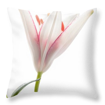 Photograph Of A Pale Lily Opening I Throw Pillow by David Perry Lawrence