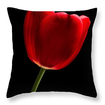 Photograph Of A Red Tulip On Black I Throw Pillow by David Perry Lawrence
