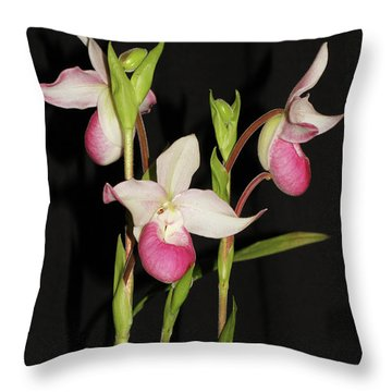 Phragmipedium Cardinale Wacousta Orchid Throw Pillow