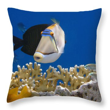Picasso Fish And Klunzingerwrasse Throw Pillow
