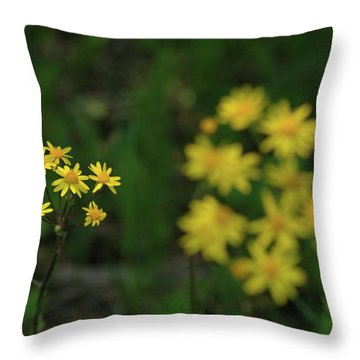 Throw Pillow featuring the photograph Pick Me Daisies by LeeAnn McLaneGoetz McLaneGoetzStudioLLCcom