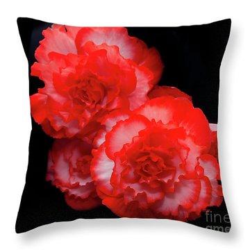 Picotee Begonia Throw Pillow