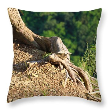 Picture Of A Tree On A Ledge Throw Pillow