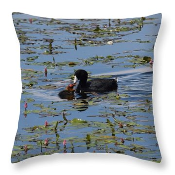 Pied Billed Grebe Lake John Swa Co Throw Pillow